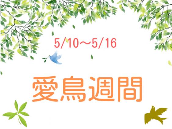 5月10日~16日『  愛鳥週間 』保育実習に役立つ子どもへのお話と保育