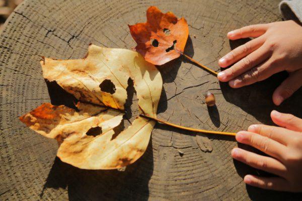 ≪ 保育実習 におすすめ♪≫秋の自然に親しむ戸外遊びの簡単アイディア